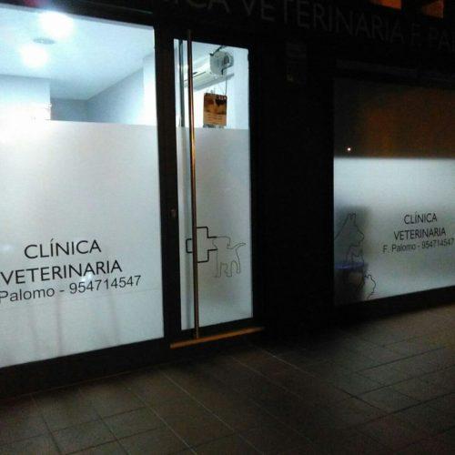 Instalación de vinilos para mamparas en Sevilla Veterinaria
